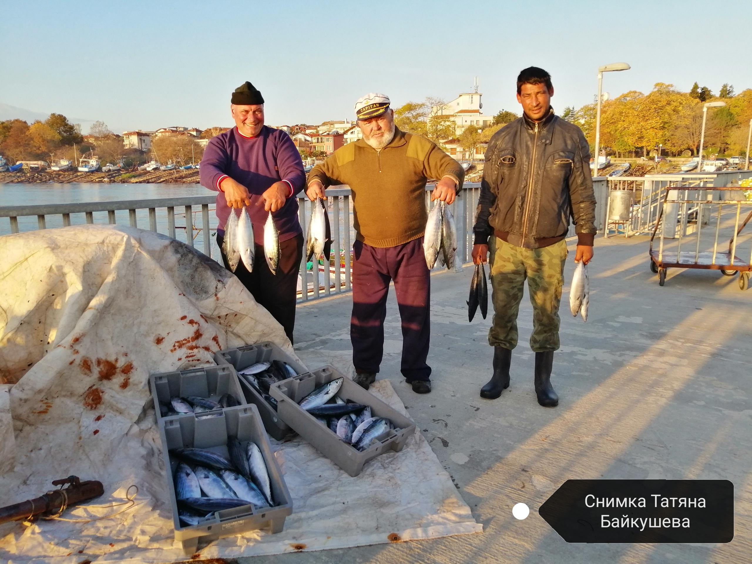 Паламуд напълни мрежите на ахтополските рибари